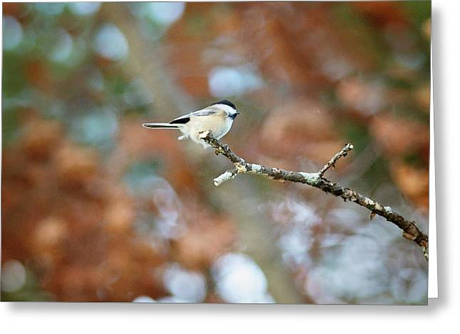 Greeting Card featuring the photograph Fall Chickadee by Sue Collura