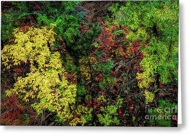 Greeting Card featuring the photograph Fall Color Along The Big Tom by Jon Burch Photography