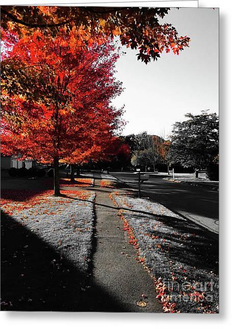 Fiery Fall Trees, Part 1 Greeting Card by JMerrickMedia