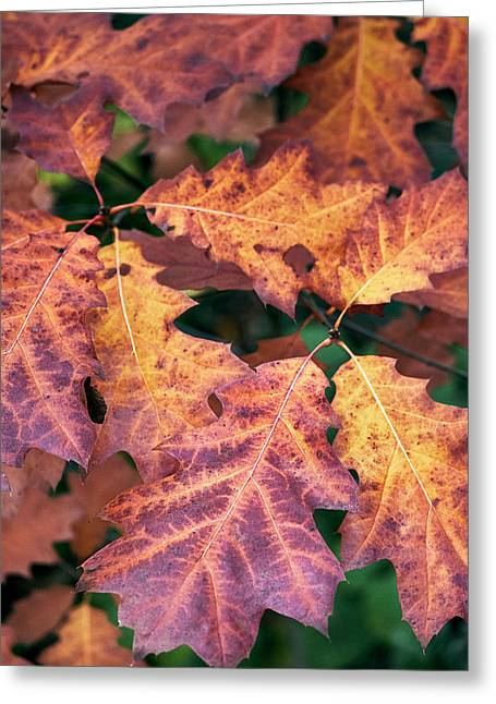 Fall Flames Greeting Card