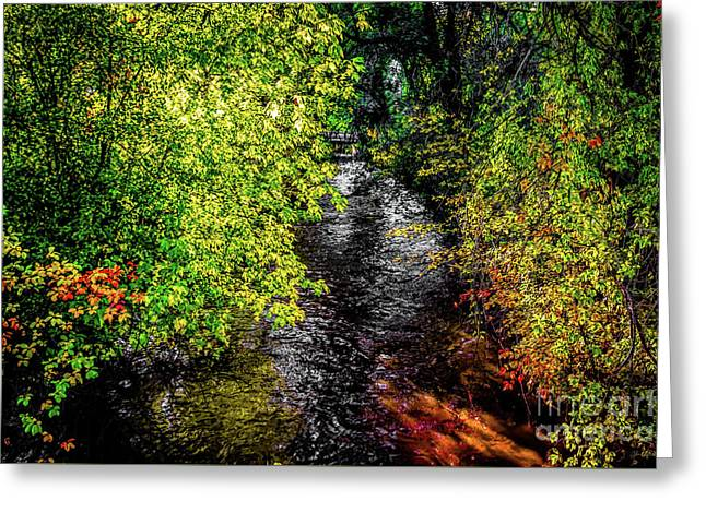 Greeting Card featuring the photograph Fall Foliage by Jon Burch Photography