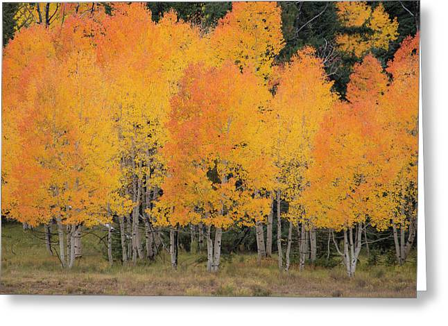 Fall Has Arrived Greeting Card