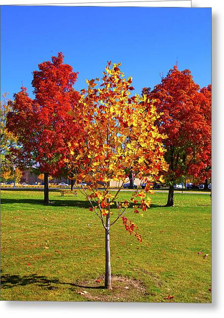 Greeting Card featuring the photograph Fall In Boise by Dart and Suze Humeston
