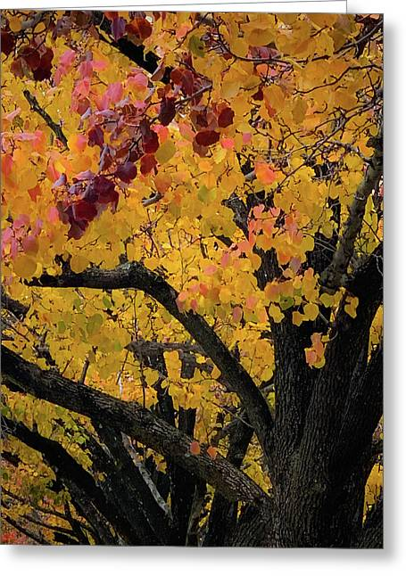Fall In Carlyle Greeting Card