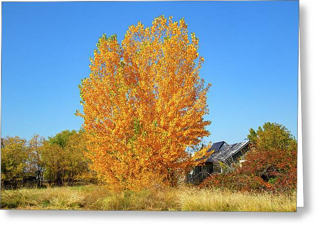 Greeting Card featuring the photograph Fall In Idaho by Dart and Suze Humeston