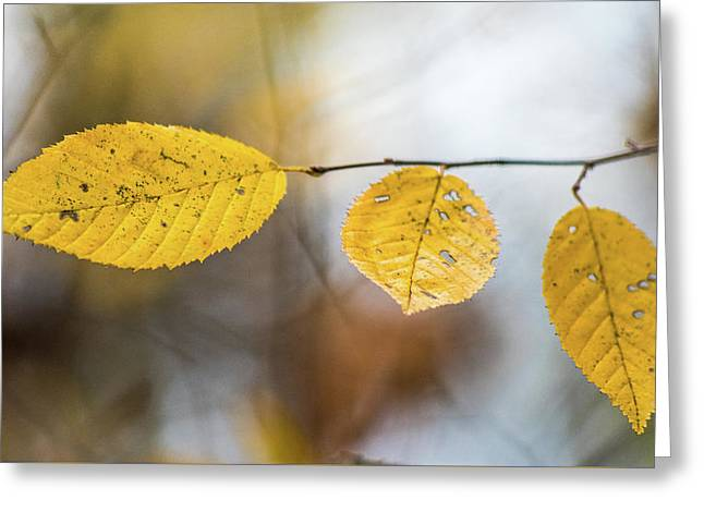 Greeting Card featuring the photograph Fall In Triplicate by Michael Arend