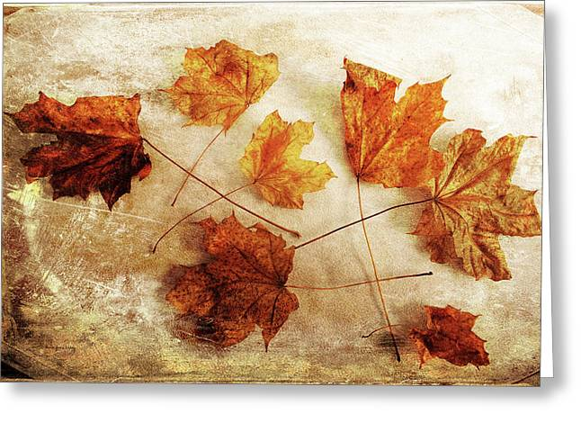 Greeting Card featuring the photograph Fall Keepers by Randi Grace Nilsberg