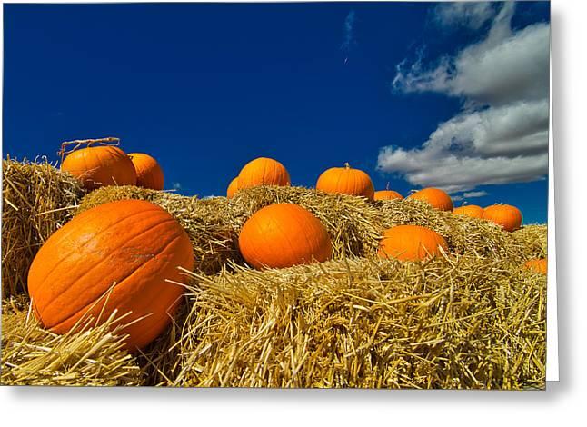 Fall Pumpkins Greeting Card
