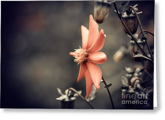 Fall Season Red Flower Closeup Greeting Card