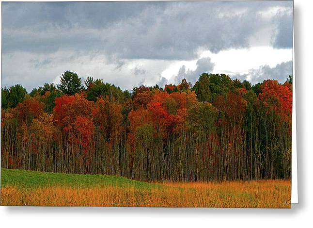 Fall Trees Off Rte 23a Greeting Card