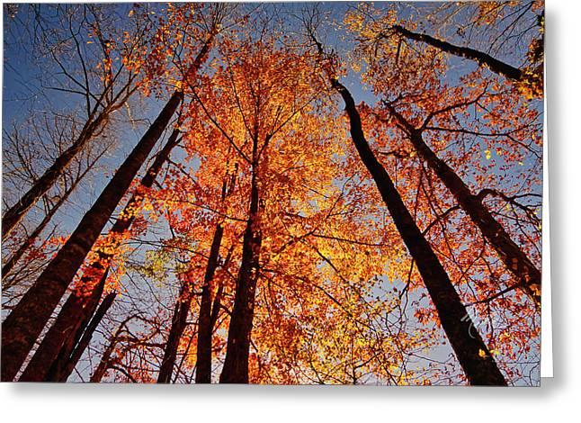 Fall Trees Sky Greeting Card