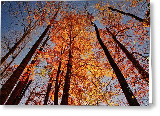 Fall Trees Sky Greeting Card