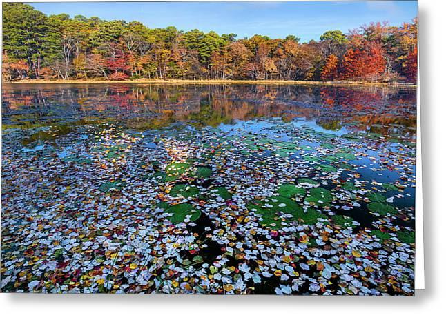 Fallen Leaves On Lake, Daingerfield Greeting Card