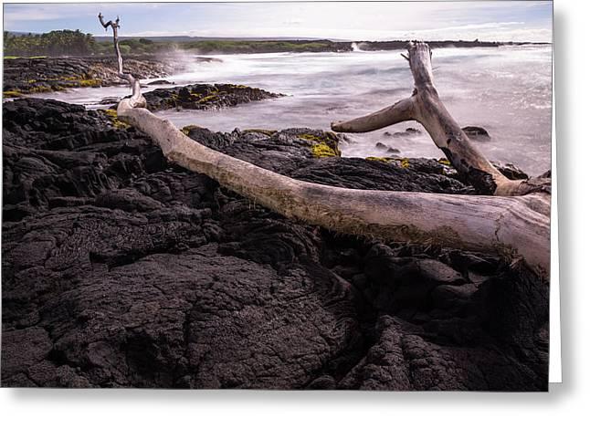 Fallen Tree At Punalu'u Beach Greeting Card