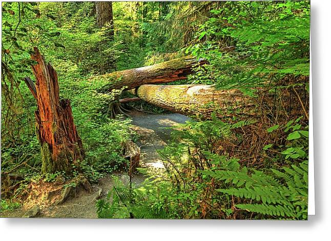 Fallen Trees In The Hoh Rain Forest Greeting Card