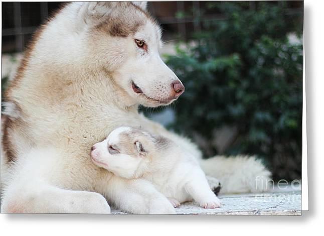 Family Dog Greeting Card