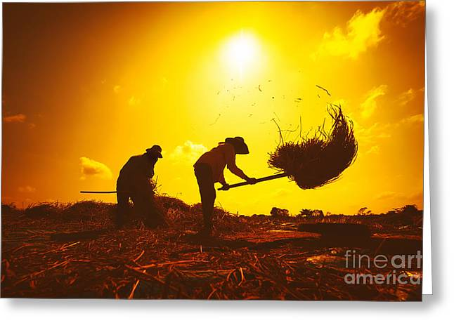 Farmers Silhouettes At Sunset. Rice Greeting Card
