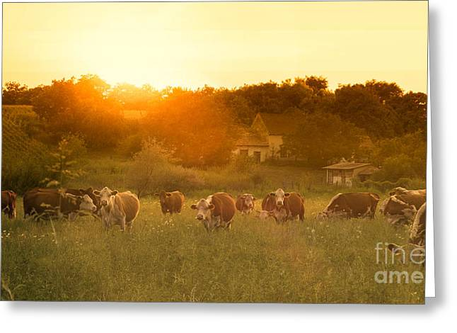 Farmland Summer Scene In Sunset Greeting Card