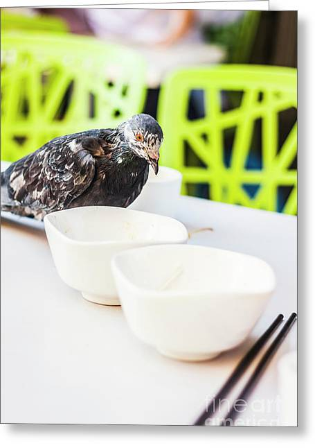 Fast Food Asian Pigeon Greeting Card