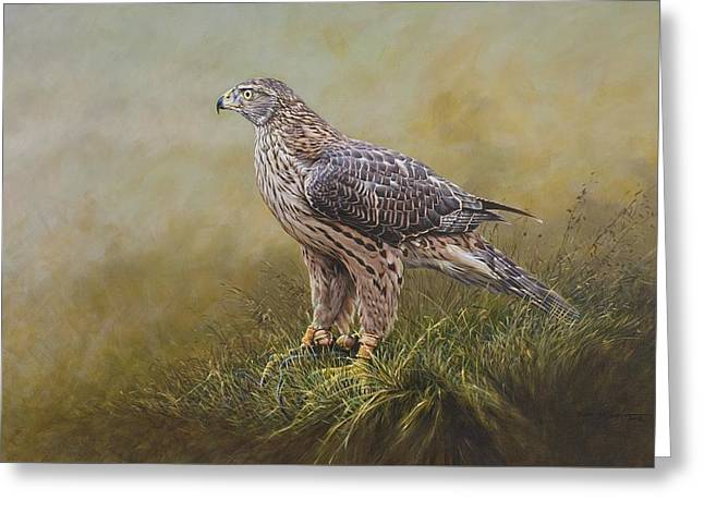 Greeting Card featuring the painting Female Goshawk Paintings by Alan M Hunt