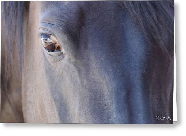 Fenced Foal Greeting Card