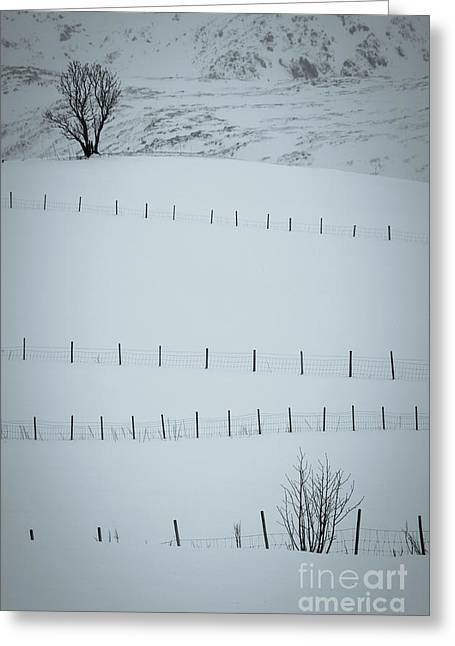 Fences And Trees Greeting Card
