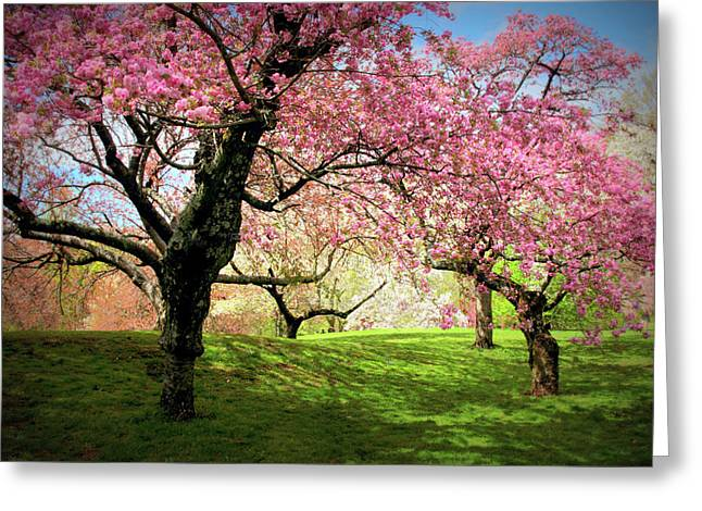 Cherry Orchard Afternoon Greeting Card