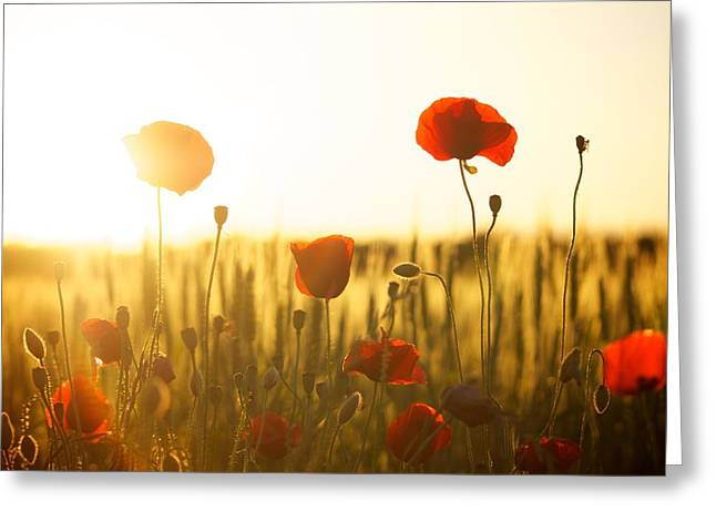 Field Of Poppies At Dawn Greeting Card