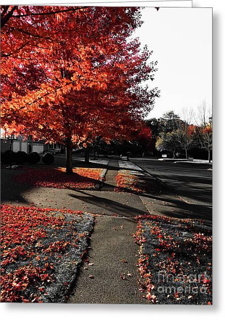 Fiery Fall Trees, Part 2 Greeting Card by JMerrickMedia