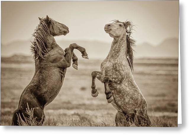 Fighting Stallions 2 Greeting Card