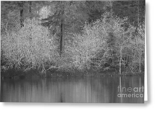 Greeting Card featuring the photograph Filter Series 200b by Jeni Gray