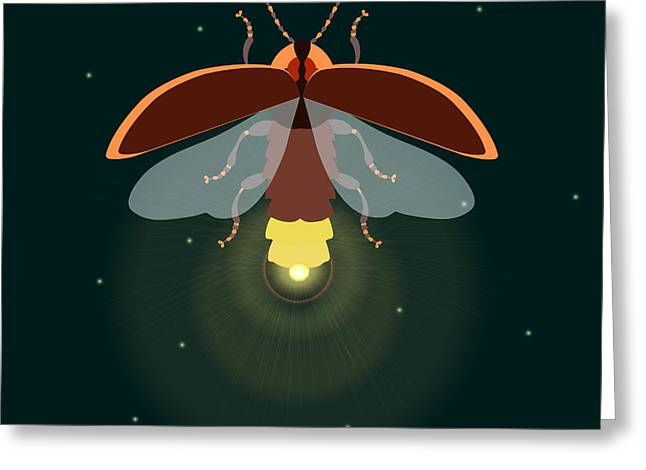 Firefly Design Template. Lightning Bug Greeting Card
