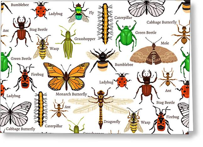 Flat Insects Seamless Pattern Vector Greeting Card