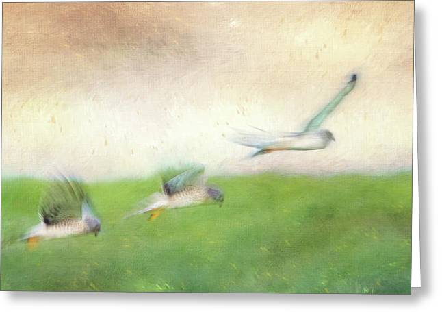 Flight Of The Harrier Greeting Card by Tracy Munson