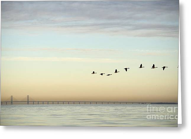Flock Of Birds Flying Near Bridge Greeting Card