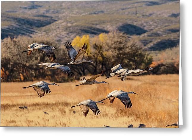 Flock Of Sandhill Cranes Taking Greeting Card