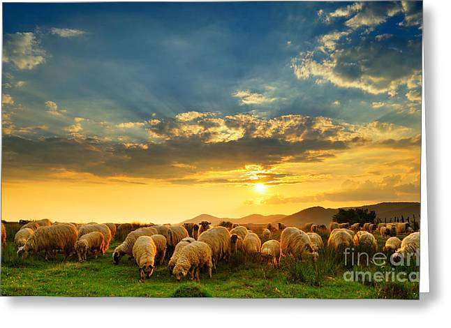 Flock Of Sheep Grazing In A Hill At Greeting Card