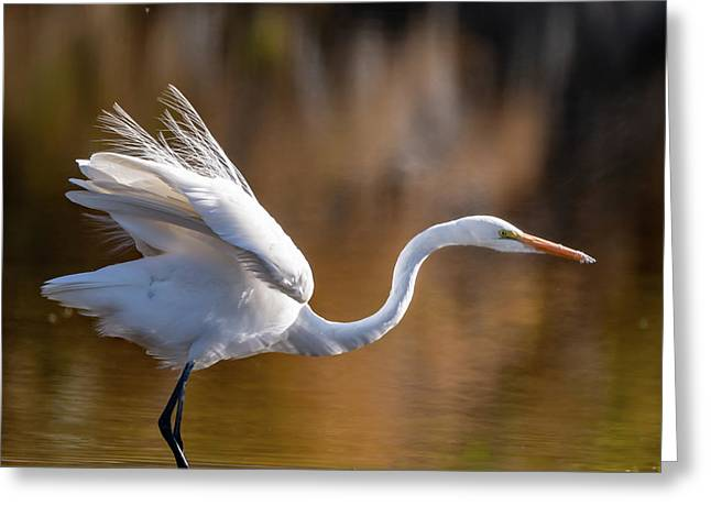 Floofy Egret Greeting Card