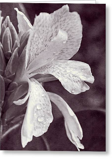 Greeting Card featuring the photograph Floral Memories I by Leda Robertson