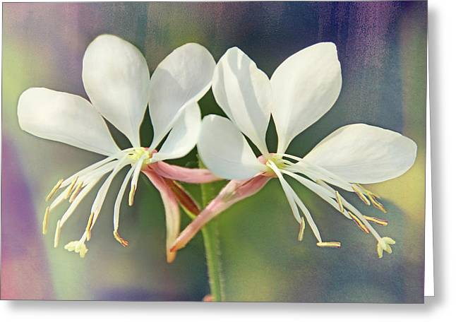 Greeting Card featuring the photograph Floral Palette I by Leda Robertson