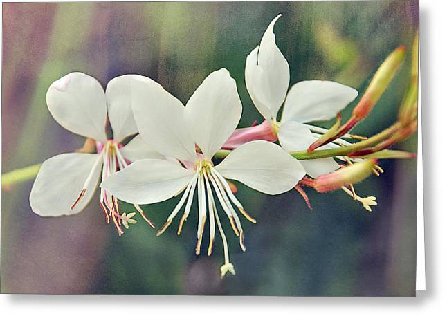 Greeting Card featuring the photograph Floral Palette II by Leda Robertson