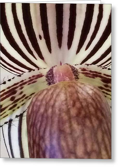 Flora_orchid_7568_15 Greeting Card