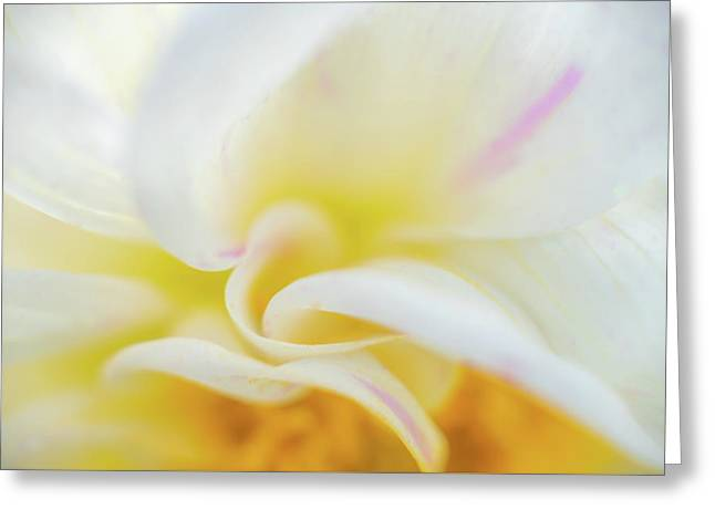 Greeting Card featuring the photograph Flower Curves by Francisco Gomez