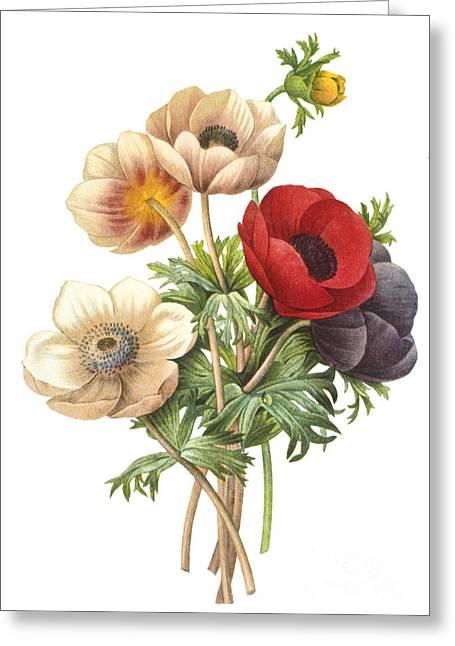 Flower Illustration Greeting Card
