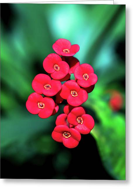 Flower Parade Greeting Card