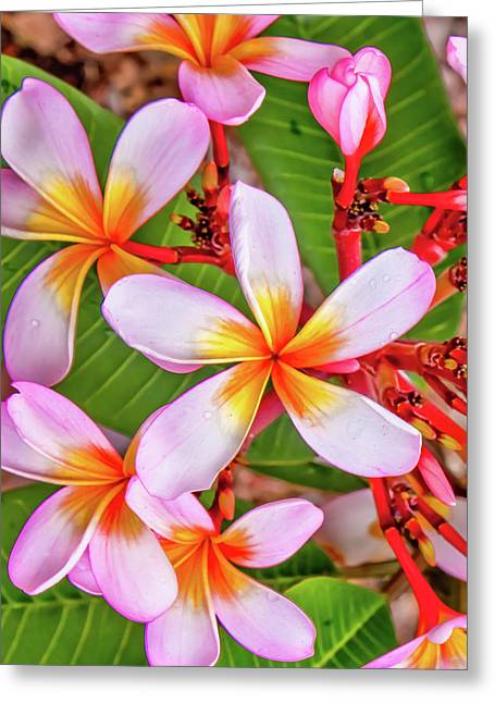 Flower Patterns Collection Set 06 Greeting Card