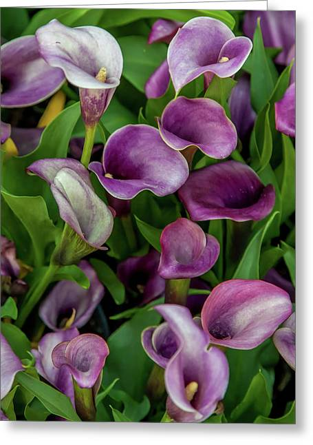 Flower Patterns Collection Set 08 Greeting Card