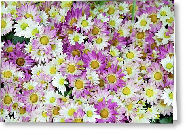 Flower Patterns Collection Set 10 Greeting Card