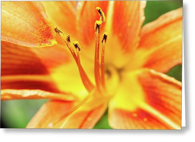 Flower Pollen Greeting Card