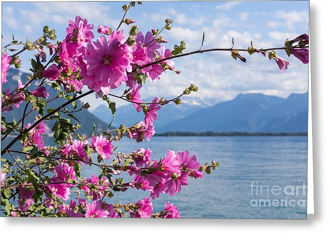 Flowers Against Mountains And Lake Greeting Card